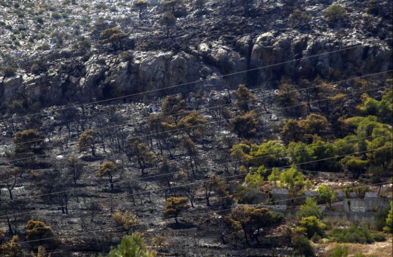 Σε ύφεση η πυρκαγιά στην Παλιά Περίθεια Κέρκυρας | tanea.gr
