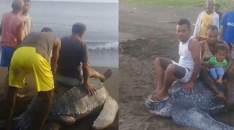 Καβάλησαν θαλάσσια χελώνα που βγήκε στην αμμουδιά να γεννήσει | tanea.gr