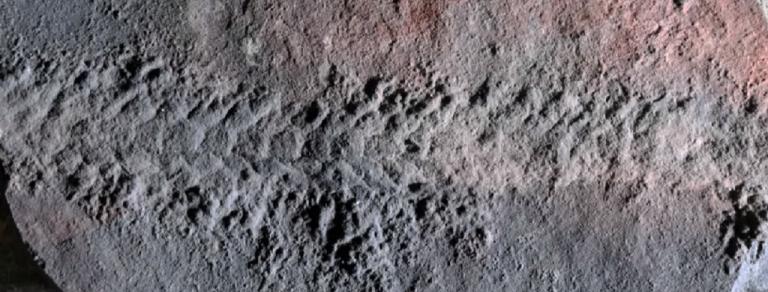Ανακαλύφθηκε απολίθωμα προϊστορικής σαρανταποδαρούσας | tanea.gr