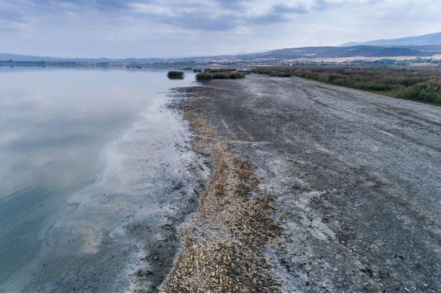 Λίμνη Κορώνεια : Σε κακή κατάσταση αλλά ακόμα «ζωντανή»   tanea.gr
