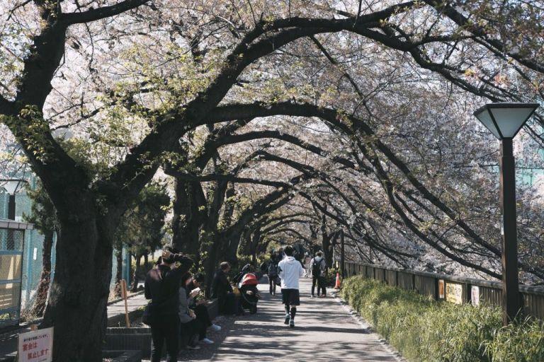 Tόκιο: Ένα ταξίδι στην πόλη των αντιθέσεων   tanea.gr