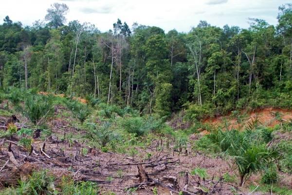 Με εξαφάνιση απειλούνται σχεδόν τα μισά είδη δέντρων στην Ευρώπη | tanea.gr