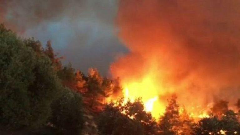 Φωτιά στη Νέα Μάκρη – Καταγγελίες για εμπρησμό | tanea.gr