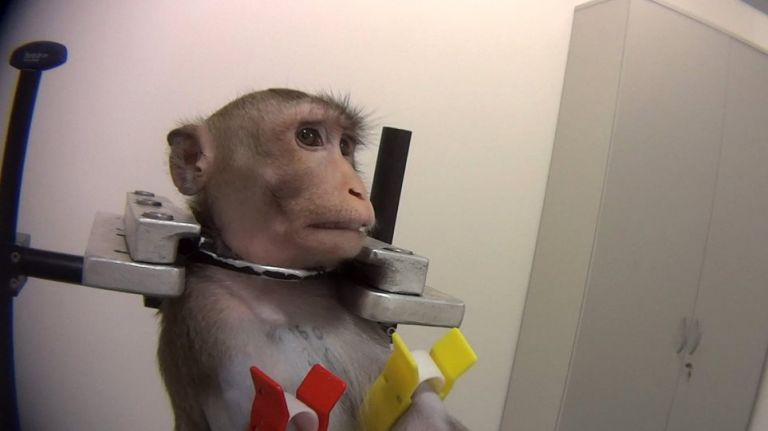 Γερμανία : Οργή με βασανιστήρια σε πειραματόζωα - Τα βίντεο σοκ | tanea.gr