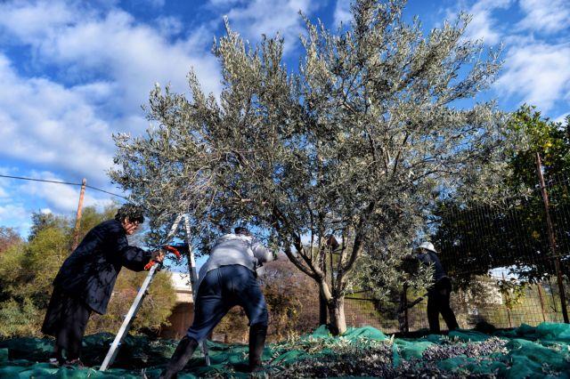 Πώς η Ελλάδα αδυνατεί να δρέψει τον πλούτο από το ελαιόλαδό της | tanea.gr