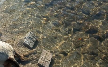 Βόλος : Άγρια κακοποίηση σκύλου – Έδεσαν πέτρες και τον πέταξαν στη θάλασσα | tanea.gr