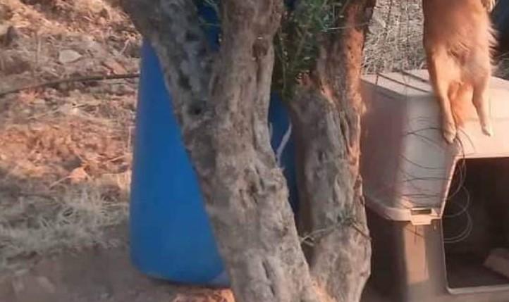 Κτηνωδία : Τρία χρόνια κλωτσούσαν μία σκυλίτσα ώσπου την κρέμασαν | tanea.gr