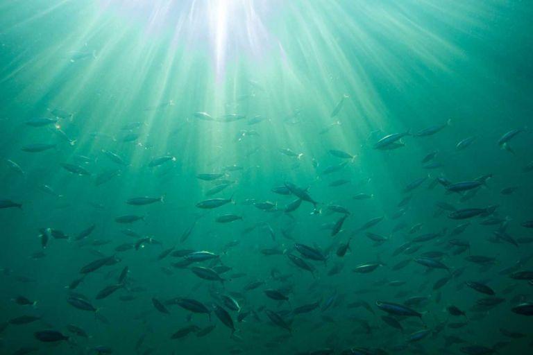 Γιατί τα ψάρια μεταναστεύουν; | tanea.gr