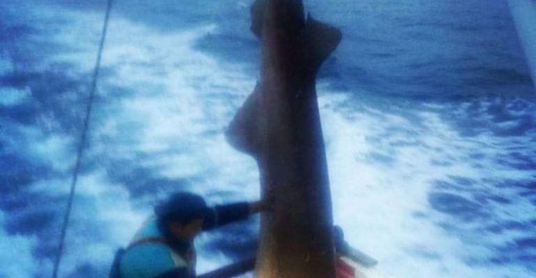 Καρχαρίας προσκυνητής ή σαπουνάς ψαρεύτηκε στις Σποράδες | tanea.gr