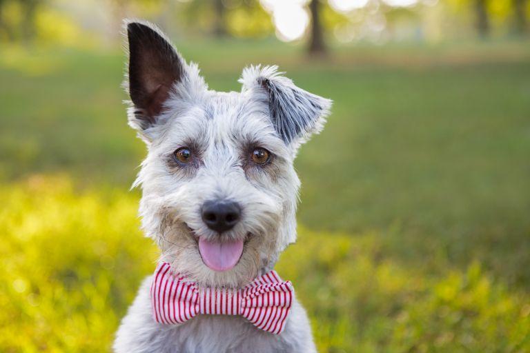 Γνωρίζετε ποια χρώματα βλέπουν οι σκύλοι; | tanea.gr