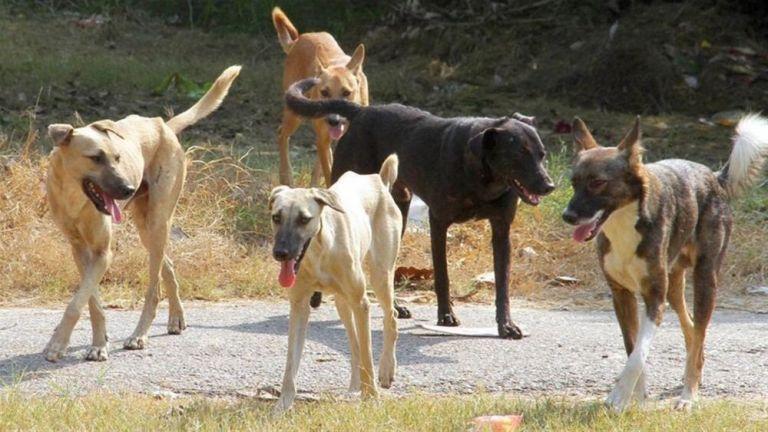 Συστηματικοί έλεγχοι, πάρκα ζωοφιλίας και στειρώσεις το... αντίδοτο για τα αδέσποτα | tanea.gr