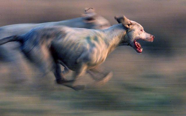 Τραγωδία στη Γαλλία: Κυνηγόσκυλα κατασπάραξαν έγκυο σε πάρκο | tanea.gr