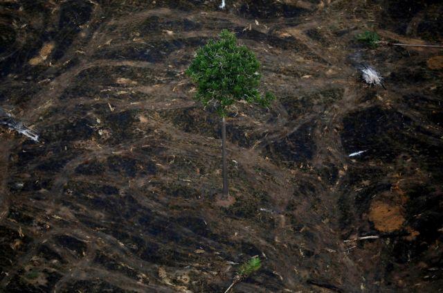 Αμαζόνιος: Έχασε 9.762 τετραγωνικά χιλιόμετρα βλάστησης σε 12 μήνες | tanea.gr