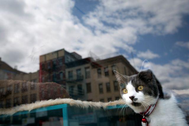 Λευτεριά στις... γάτες με απόφαση της Κομισιόν | tanea.gr
