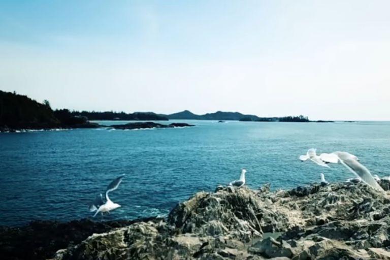 Αυτό είναι το απόλυτο viral: Διακοπές σε ένα… ανύπαρκτο νησί | tanea.gr