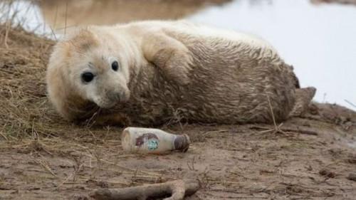 Σοκάρει φωτογραφία μικρής φώκιας που παίζει με γυάλινο μπουκάλι | tanea.gr