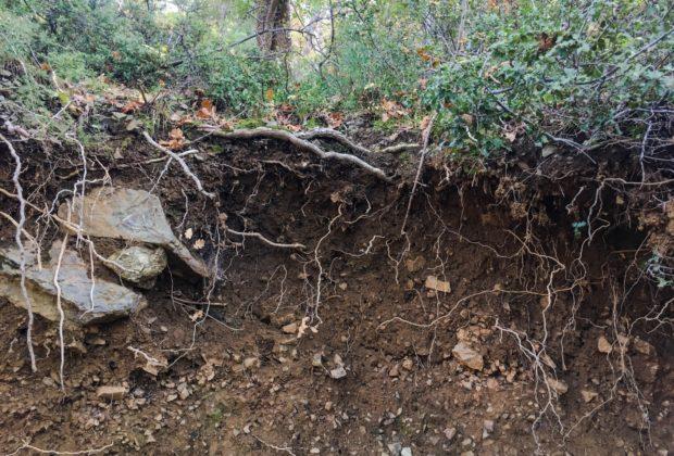 Το 33% των εδαφών του πλανήτη έχουν υποβαθμιστεί λόγω διάβρωσης | tanea.gr