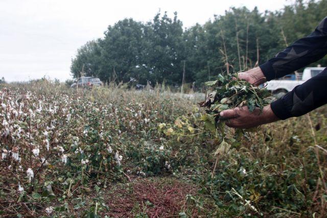 Μαραθώνας: Παραδόθηκε ο εργοδότης που πυροβόλησε ινδούς εργάτες | tanea.gr
