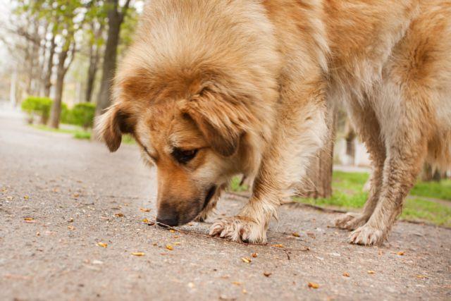 Νέα κτηνωδία – Ανεγκέφαλοι κρέμασαν σκύλο από δέντρο | tanea.gr