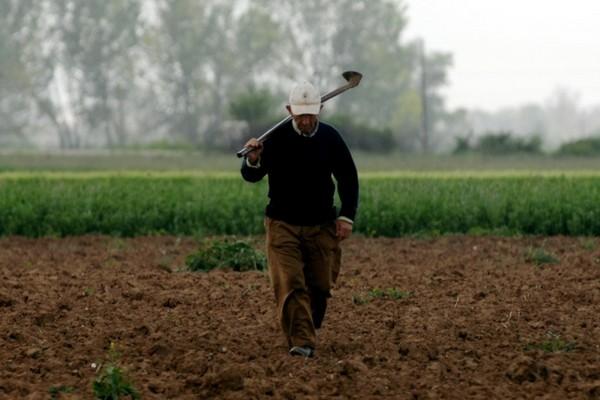 Ποσό 805.000 ευρώ για τη θωράκιση του φυτικού κεφαλαίου της χώρας | tanea.gr
