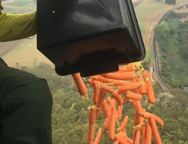 Πέταξαν από ψηλά τόνους λαχανικών για τα άγρια ζώα της Αυστραλίας [Εικόνες] | tanea.gr
