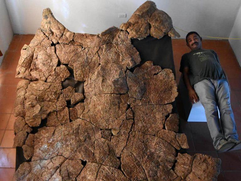 Απολιθώματα γιγάντιας χελώνας με μέγεθος αυτοκινήτου ανακαλύφθηκαν στη Νότια Αμερική   tanea.gr