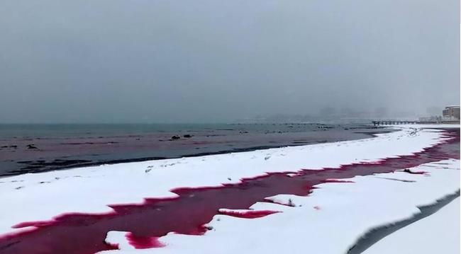 Καζακστάν: «Μάτωσε» η θάλασσα   tanea.gr