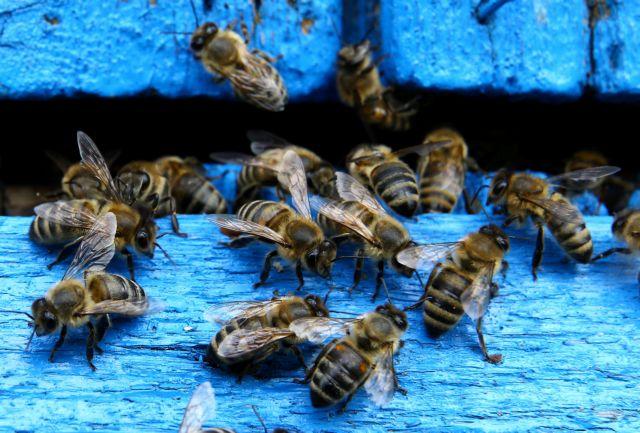 Mega : Οι μέλισσες εκπέμπουν SOS για την κλιματική αλλαγή | tanea.gr