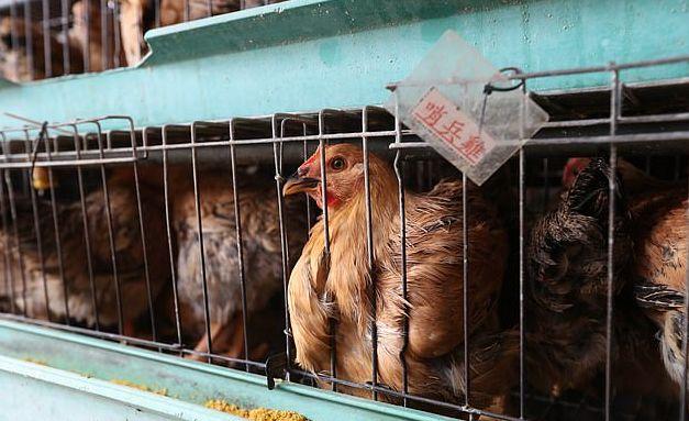 Μετά τον κοροναϊό, απειλή και η γρίπη των πουλερικών στην Κίνα   tanea.gr