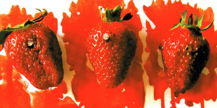 Οι ματωμένες φράουλες και οι Μανωλάδες της ελληνικής ντροπής | tanea.gr
