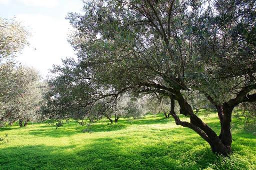Κρήτη : Επιστροφή στην αφετηρία, στη φύση και την ντόπια ποιότητα.   tanea.gr