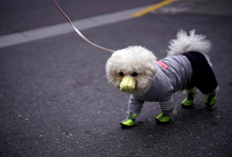 Χονγκ Κονγκ : Πέθανε ο πρώτος σκύλος που είχε διαγνωστεί με κοροναϊό   tanea.gr