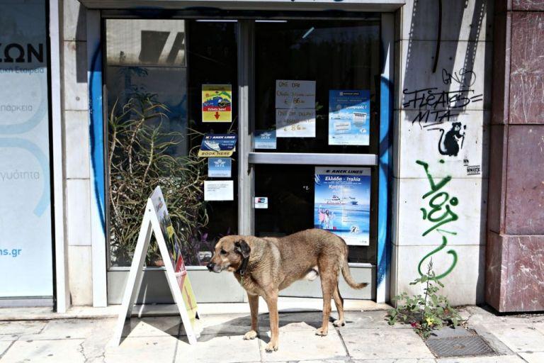 Διευκρινίσεις σχετικά με τη φροντίδα αδέσποτων | tanea.gr