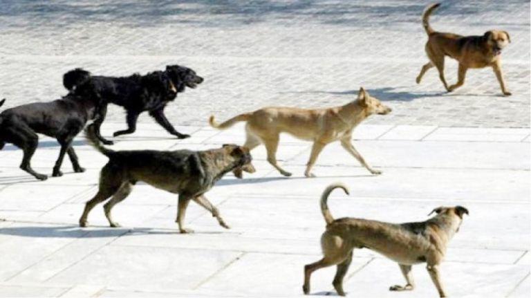 Δείτε και τυπώστε το έντυπο βεβαίωσης μετακίνησης για σίτιση αδέσποτων ζώων | tanea.gr