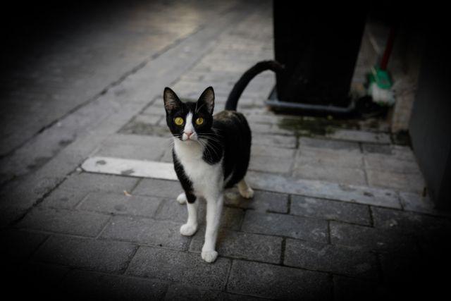Κοροναϊός : «Προσοχή στις γάτες» σύμφωνα με έρευνα κινέζων επιστημόνων   tanea.gr