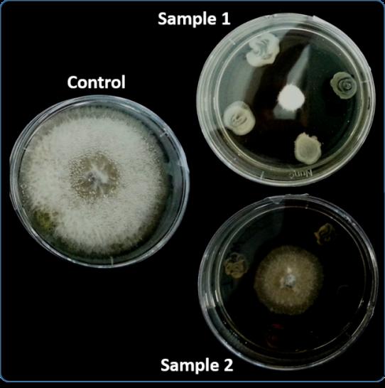 Στο «κυνήγι» των αντιβιοτικών σε ακραία φυσικά περιβάλλοντα   tanea.gr