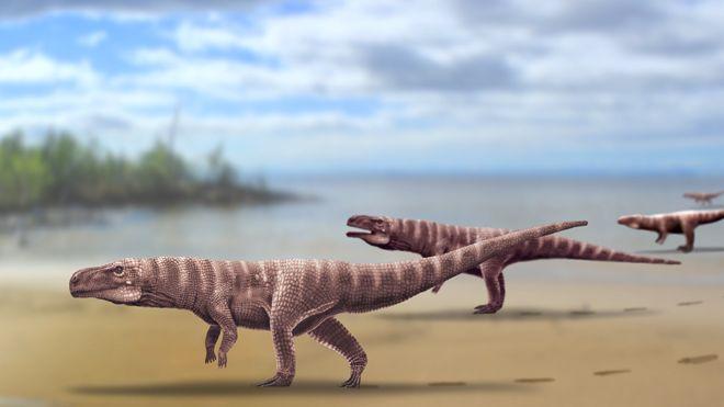 Περπατούσαν κάποτε οι κροκόδειλοι στα δύο πόδια; Τι δείχνουν πατημασιές 115 εκατ. ετών | tanea.gr