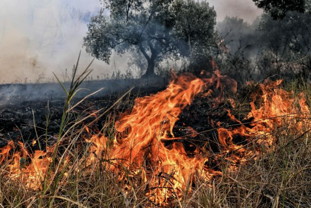 Φωτιά καίει ξερά χόρτα στη Σταμάτα | tanea.gr