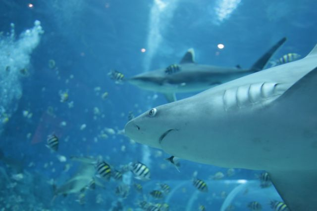 Φονική επίθεση λευκού καρχαρία – Νεκρή 63χρονη στις ΗΠΑ   tanea.gr