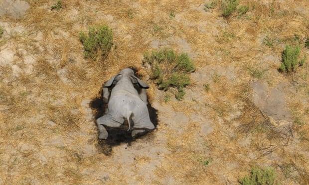 Μυστηριώδεις θάνατοι ελεφάντων στην Αφρική | tanea.gr