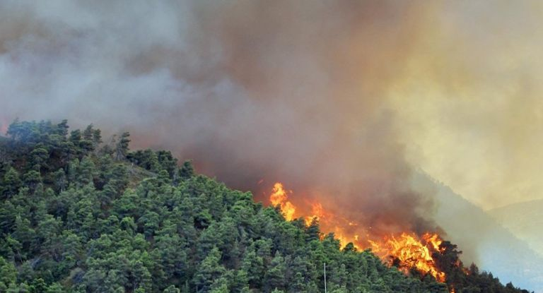 Φωτιά σε αγροτοδασική έκταση στην Κάτω Αχαΐα | tanea.gr