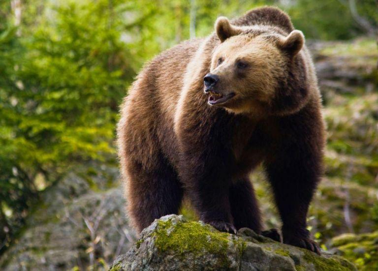 Καστοριά: Με σπασμένο χέρι νοσηλεύεται ο 26χρονος που συναντήθηκε με αρκούδα | tanea.gr
