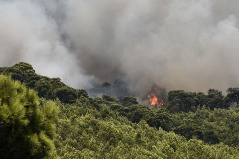 Σαράντα επτά πυρκαγιές το τελευταίο 24ωρο σε όλη την Ελλάδα   tanea.gr