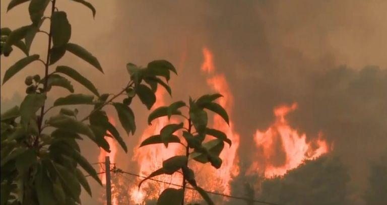 Φωτιά στην Ωλένη Ηλείας – Μεγάλη κινητοποίηση της Πυροσβεστικής | tanea.gr