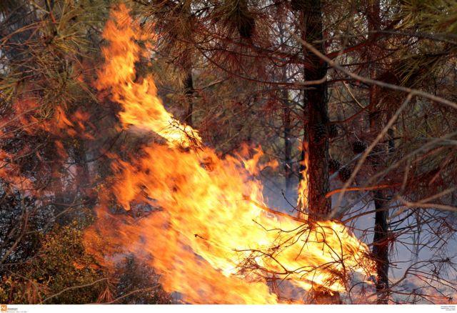 Φωτιά στην Εύβοια: Δύσκολη η κατάσταση - Ανεξέλεγκτη η φωτιά στους Ραπταίους | tanea.gr