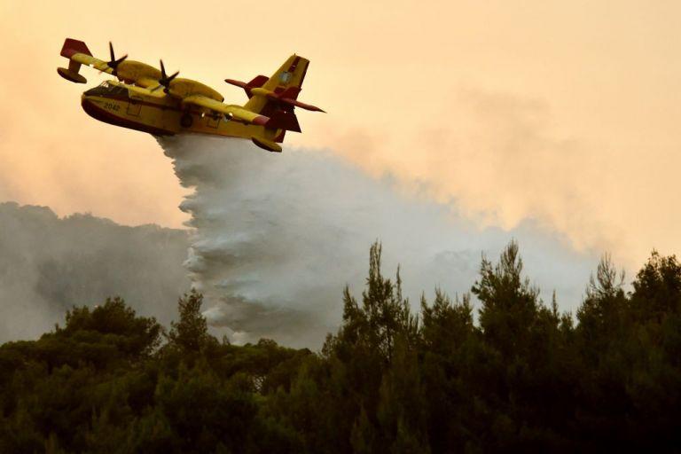 Πυρκαγιά σε δασική περιοχή της Κέρκυρας | tanea.gr