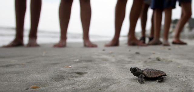 Μπαλί: Χιλιάδες χελωνάκια αφέθηκαν ελεύθερα στη θάλασσα   tanea.gr