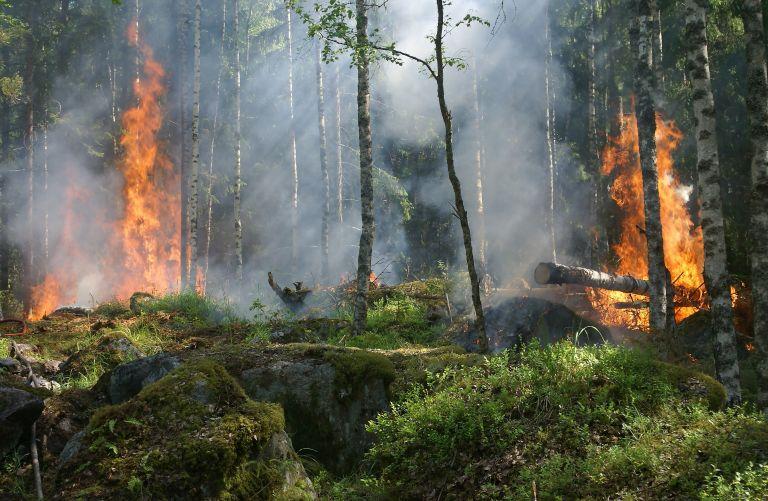 Υψηλός ο κίνδυνος πυρκαγιάςτη Δευτέρα σε Αττική και Εύβοια | tanea.gr