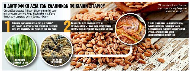Εντυπωσιακή έρευνα για τη διατροφή: Οι ποικιλίες σιταριού που κάνουν καλό στην υγεία | tanea.gr