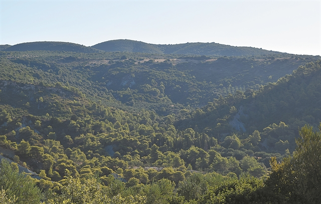 Υπεραιωνόβιοι μάρτυρες: Τα δέντρα που έζησαν την επανάσταση του 1821 | tanea.gr